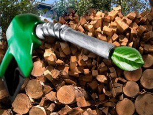 What is the biofuel? Small introduction